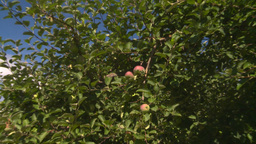 HD2008-8-2-19 fruit stand apple orchard Z in Stock Video Footage