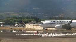 HD2008-8-2-23 B737 taxi Kelowna Stock Video Footage
