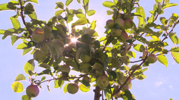 HD2008-8-2-39 apple orchard Stock Video Footage