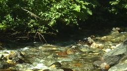 HD2008-8-3-44 mountain stream Stock Video Footage