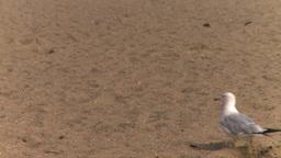 HD2008-8-4-12 seagull beach Stock Video Footage