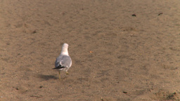 HD2008-8-4-12 seagull beach Stock Video Footage