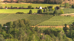 HD2008-8-4-14 orchards Stock Video Footage