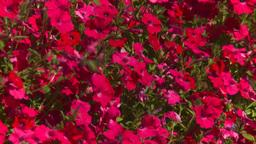 HD2008-8-4-20 hummingbird Stock Video Footage