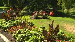 HD2008-8-4-32 flower garden Stock Video Footage