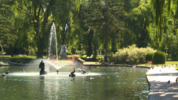 HD2008-8-4-36 water fountain ducks Footage