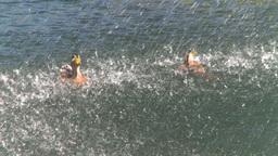 HD2008-8-4-39 water fountain ducks Stock Video Footage