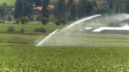 HD2008-8-4-51 irrigation corn field Stock Video Footage