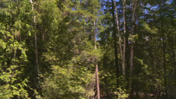 HD2008-8-4-57 drive dry scrubland forest Stock Video Footage