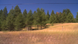 HD2008-8-4-59 TL drive dry scrubland forest Stock Video Footage