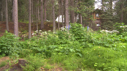 HD2008-8-6-14 cabin woods flowers Footage