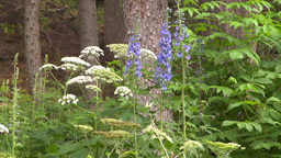 HD2008-8-6-16 woods flowers Stock Video Footage