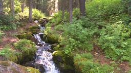 HD2008-8-7-37 mossy mtn stream Stock Video Footage