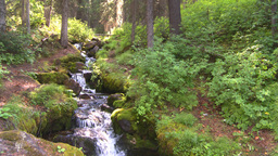 HD2008-8-7-37 mossy mtn stream Stock Video Footage