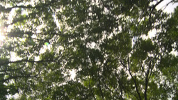 HD2008-8-8-9 drive up trees clouds Stock Video Footage