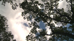 HD2008-8-8-11 drive up trees clouds Footage