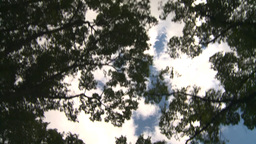 HD2008-8-8-11 drive up trees clouds Stock Video Footage