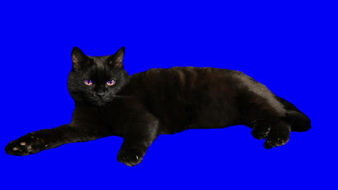 Closeup of a handsome black cat isolated Stock Video Footage