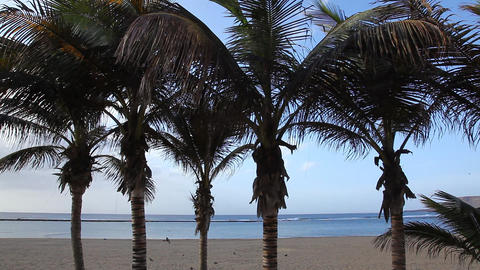 Palm trees on Beach of the Canteras Live Action
