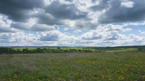 Spring meadow Footage
