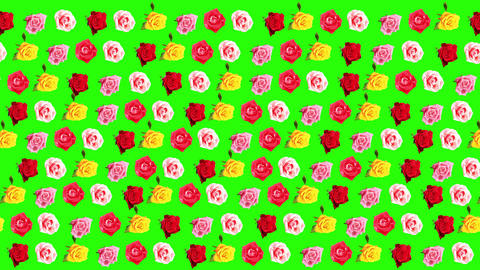 4K. Background of blooming roses time-lapse with g Footage