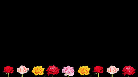 Frame of blooming roses time-lapse with alpha matt Stock Video Footage