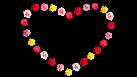 Frame of blooming roses time-lapse heart with alph Footage