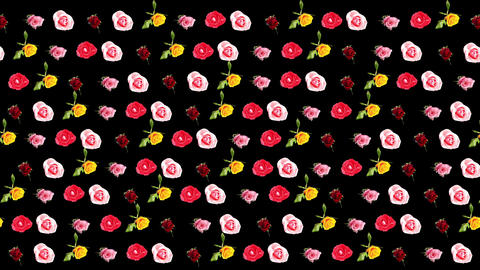 Background of blooming roses time-lapse with alpha Stock Video Footage