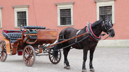 Warsaw. Horse cab in front of the royal palace Stock Video Footage