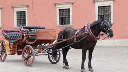 Warsaw. Horse Cab In Front Of The Royal Palace stock footage