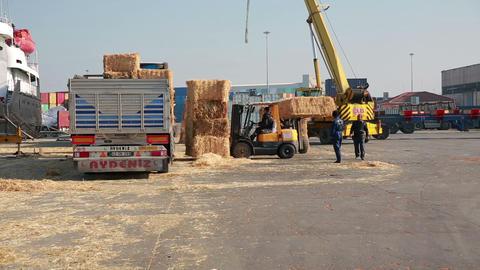 IZMIR, TURKEY - JANUARY 2013: Hay bales loaded ont Stock Video Footage