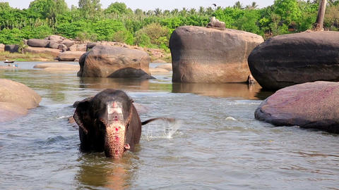 HAMPI, INDIA - APRIL 2013: Elephant bathing in riv Stock Video Footage