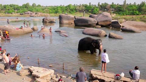HAMPI, INDIA - APRIL 2013: People and elephant wad Footage