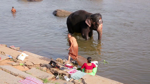 HAMPI, INDIA - APRIL 2013: People and elephant wad Footage