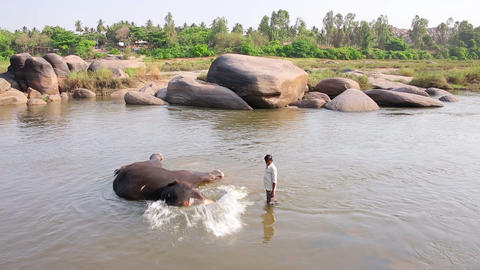 HAMPI, INDIA - APRIL 2013: Man and elephant bathin Footage