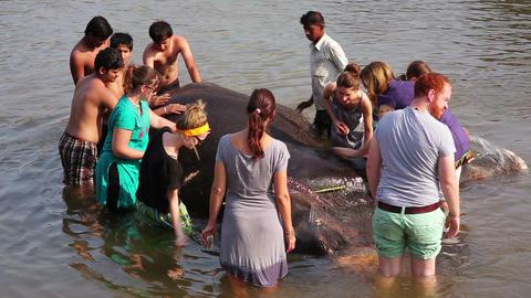 HAMPI, INDIA - APRIL 2013: People washing elephant Stock Video Footage