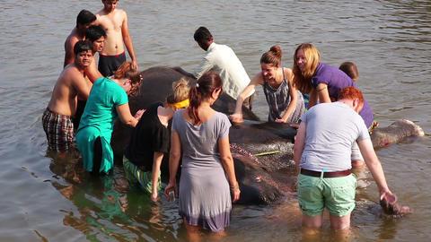HAMPI, INDIA - APRIL 2013: People washing elephant Footage