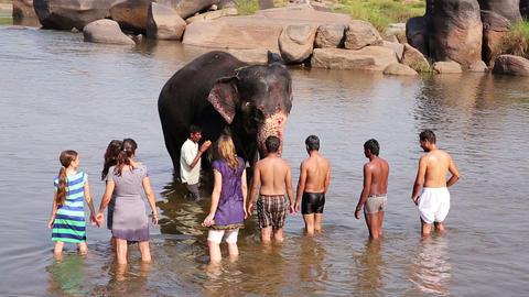 HAMPI, INDIA - APRIL 2013: People and elephant bat Stock Video Footage