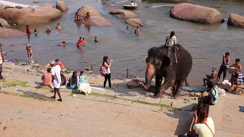 HAMPI, INDIA - APRIL 2013: Elephant emerging from  Footage