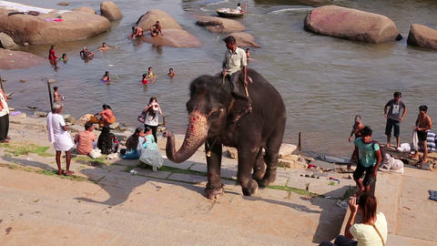 HAMPI, INDIA - APRIL 2013: Elephant emerging from Stock Video Footage