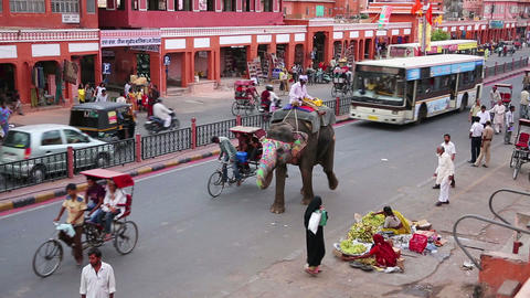 JAIPUR, INDIA - APRIL, 2013: Elephant at daily tra Footage