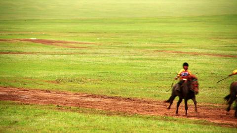 ULAANBAATAR, MONGOLIA - JULY 2013: Stallion Horse  Footage
