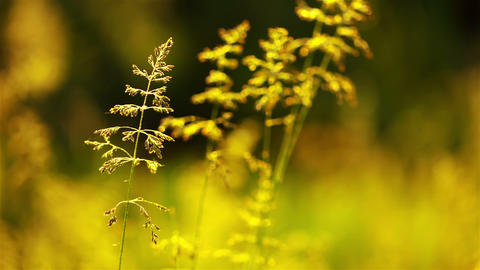 Background with Prairie Grass Footage