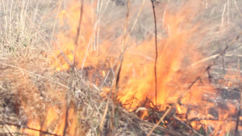 flame, fire on a meadow, grass burns in the nature Stock Video Footage