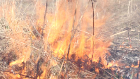 flame, fire on a meadow, grass burns in the nature Footage