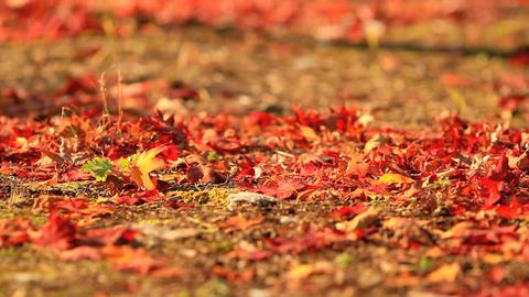 Autumn leaves ライブ動画