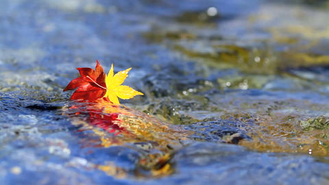 Multi-colored Autumn Leaves On The Water stock footage