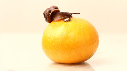 snail and fresh fruit mandarin on a white backgrou Footage