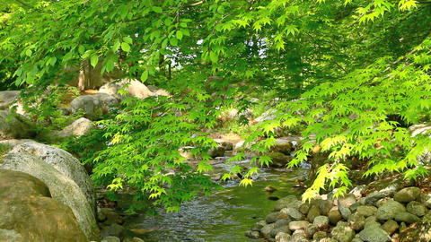 Lush green foliage Footage