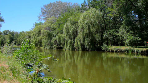 Pond with trees along the banks Stock Video Footage